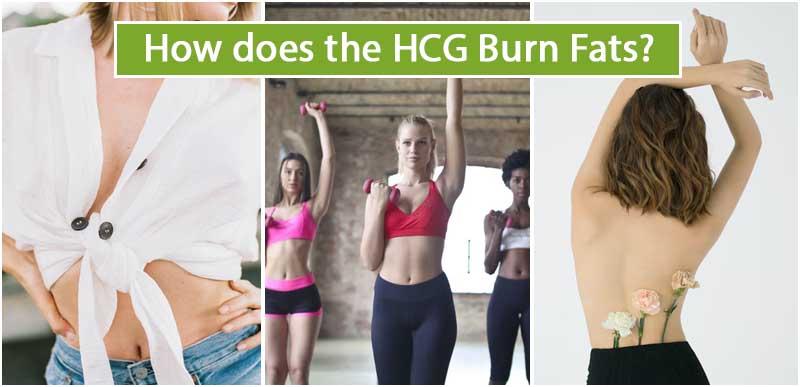 How does the HCG Burn Fats